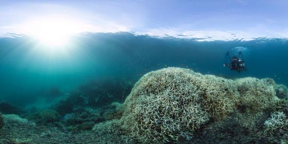Coral bleaching at Australia's Lizard Island on the Great Barrier Reef, in March 2016